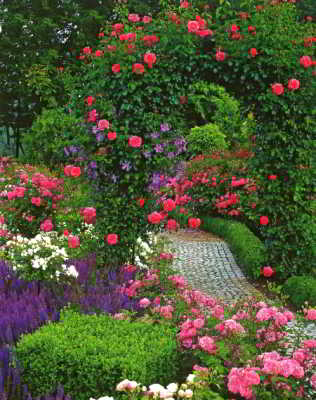 свой цитатник или сообщество!  Красивые клумбы и цветники. img http...