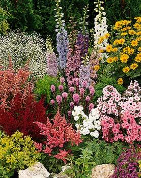 Многолетние цветы и растения для дачи