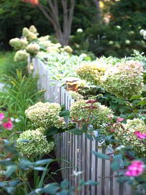 Цветущие растения в саду клумбы и