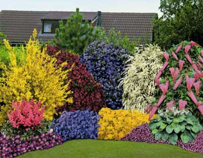Виды и сорта роз фото названия описание цветов какие