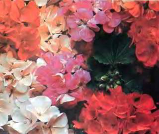 http://gardenika.ru/images/page_3.jpg